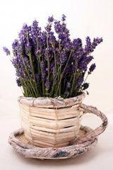 Lavender Vanilla