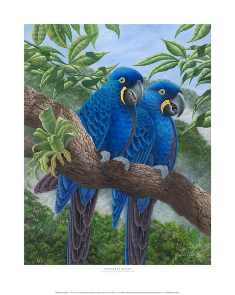 """Pantanal Blues"""