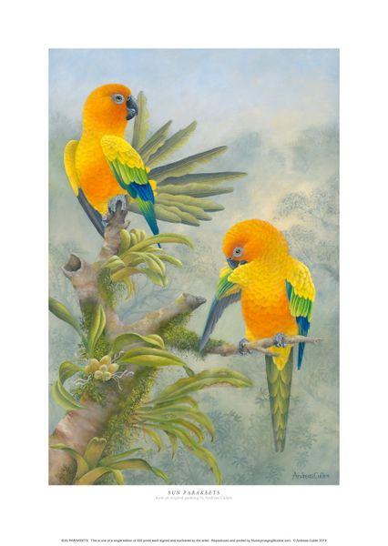 """""""Sun Parakeets"""""""