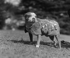 Military War Dogs are to be honored for their heroic acts.