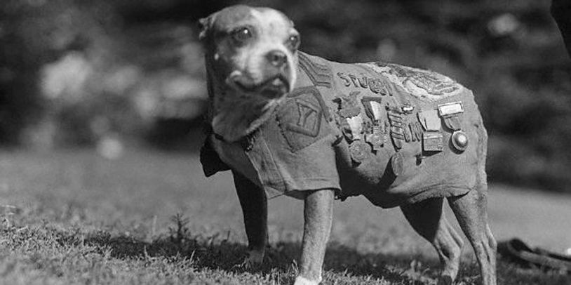 Military War Dogs are to honored for their heroic acts.