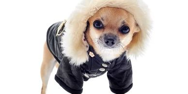 When Is It Too Cold Outside For My Dog?   Temperatures at or above 45°F will not require anything sp