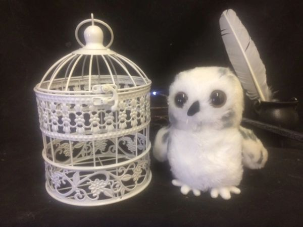 Snowy White Mail Owl - With or Without Cage