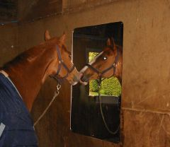Stable Mirror, Acrylic 600 x 400mm TWIN PACK!