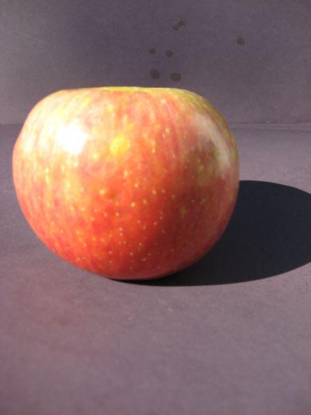 Fuji Apple 5 lbs