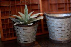 Metal Olive Buckets