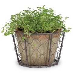 Moss Pot In Basket - Single