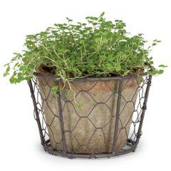 Moss Pot In Basket - Single
