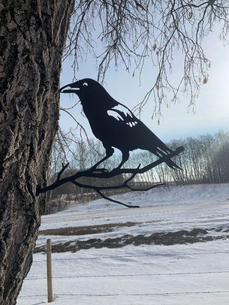 Steel Crow