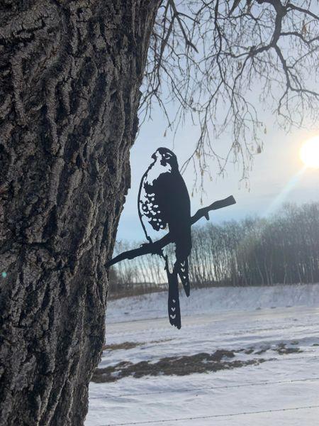 Falcon Steel Bird