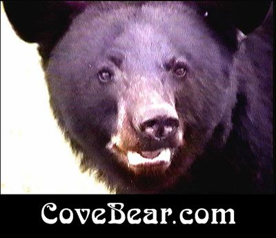 CoveBear by Kate Marshall Graphics