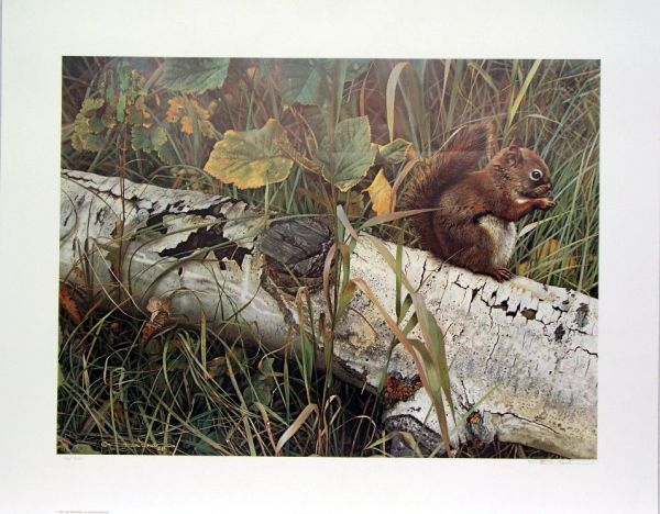 Foragers Reward, Red Squirrel by Carl Brenders