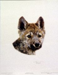 Wolf Scout 1 by Carl Brenders