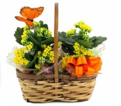 "Double 6"" plant basket (plants vary)"