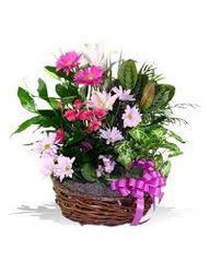 Dish Garden Basket (Choose Size & Price)