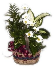 Mother's Day Dish Garden Basket (Choose Size)