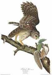 Audubon Bird Shirt