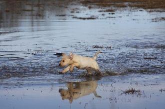 INTERMEDIATE DOG SHIPPING