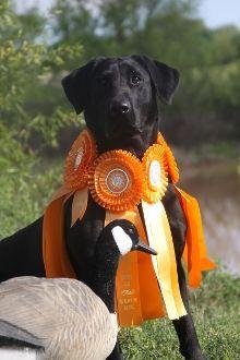 ADULT DOG TRANSPORT
