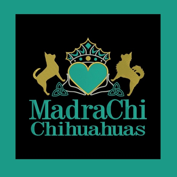 MadraChi Chihuahuas