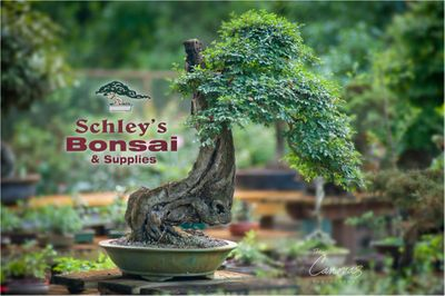 Schley's Bonsai and Supplies