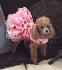 Cupcake Harness Dress