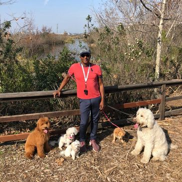 Dog Obedience Training on a hike in Playa Vista