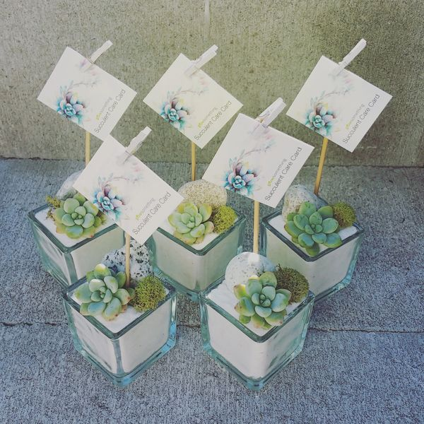 Mossy Mood Favours