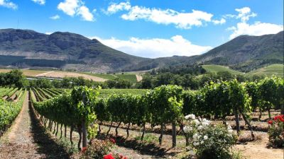 The wineries of Stellenbosch & Paarl.