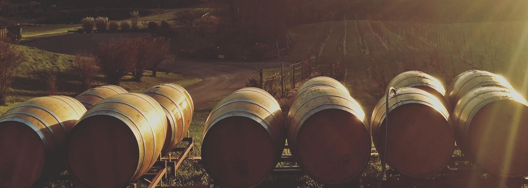 wines barrels as the sunsets