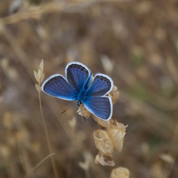 Blue butterfly in corn field. Real Health and Wellness helps you to reclaim your life and feel like yourself again.