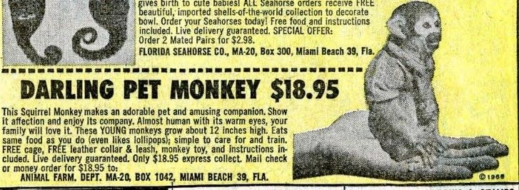 Monkey comic book ad w jacket