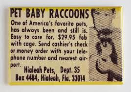 Raccoon comic book ad