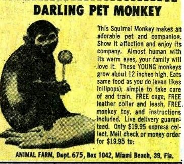 monkey comic book ad with lollipop