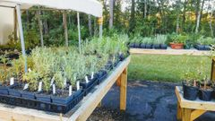 Build-your-own Kitchen Herb Garden Workshop