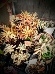 Build-Your-Own Succulent Garden