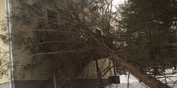 Tree fallen on home