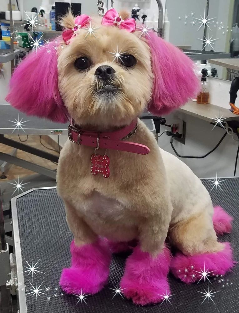 Pet Hair Coloring, Shih-Tzu Groomer! Pink Dogs!