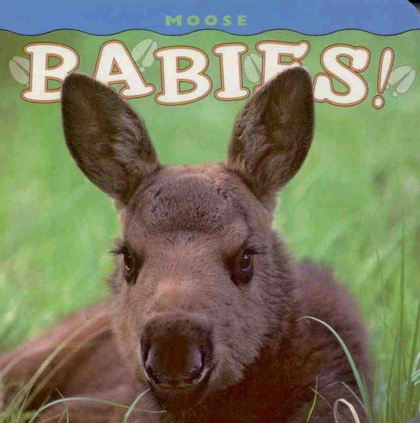 Moose Babies!