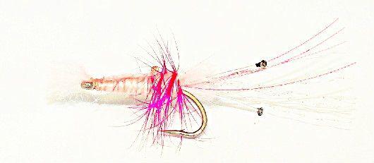 Shrimp pink