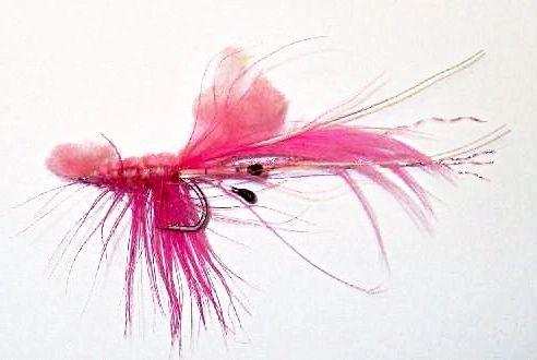 Shrimp Pattegrisen