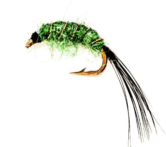 Spectra shrimp