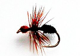 Red and Black Ant