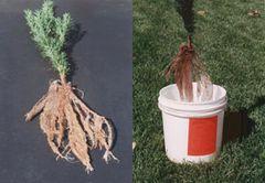 Root Dip Gel - 1 oz Package