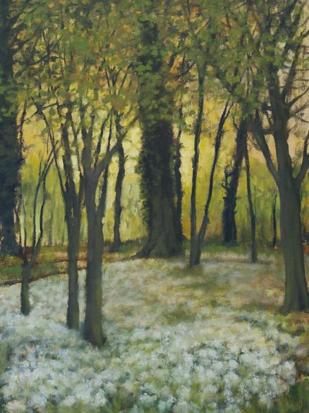 Wild Garlic in the Woods Box Canvas