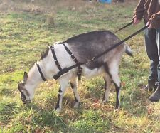 ADJUSTABLE GOAT PULLING HARNESS