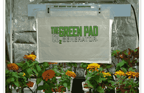 Green Pad CO 2 In a Tent