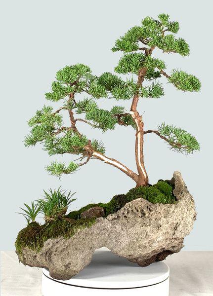 Shimpaku Juniper Kishu Bonsai on Lace Rock 8221