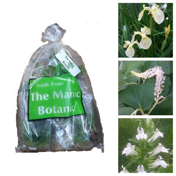 Marginal Pond Water Plants - White Collection - The Manic Botanic®