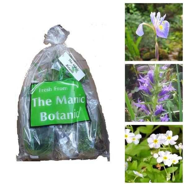 Marginal Pond Water Plants - Blue Collection - The Manic Botanic®
